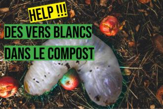 des vers blanc dans le compost