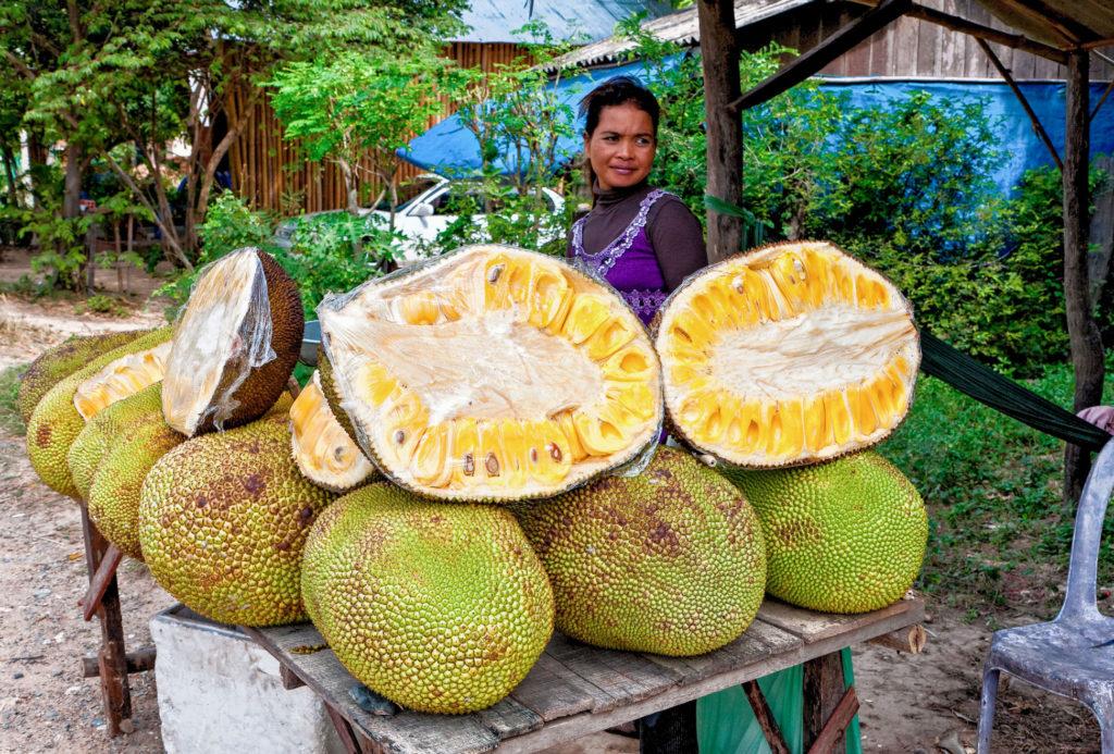 Le fruit du jacquier, le plus gros fruit du monde