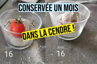 test conservation tomate cendre